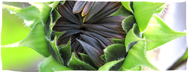 slider-zaden-pittenmixen